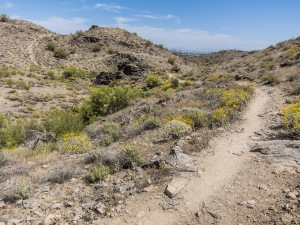 Javelina Canyon Trail