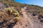 Deem Hills Trail - Teddy Bear Cactus